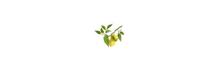 HE Citron