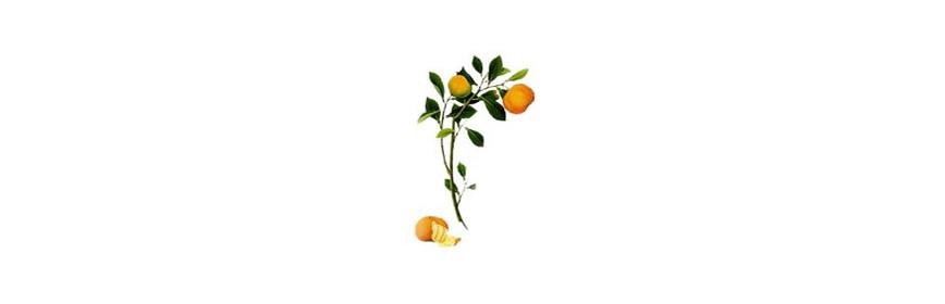 HE Mandarine